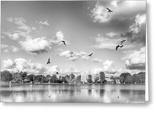 Seagulls Greeting Card by Howard Salmon