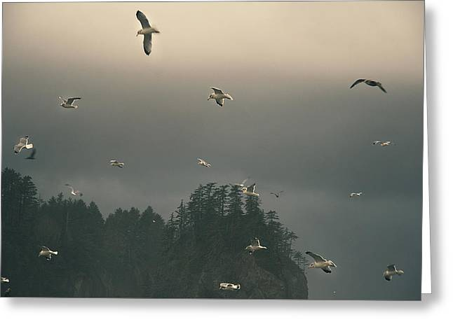 Seagulls In A Storm Greeting Card