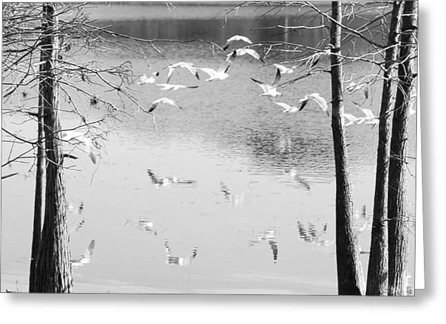 Seagulls In Flight With Reflection And Trees Greeting Card
