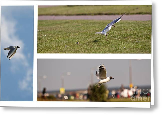 Seagulls Greeting Card by Lesley Rigg