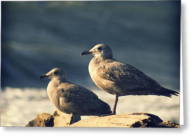 Greeting Card featuring the photograph Seagulls On A Beach by Yulia Kazansky