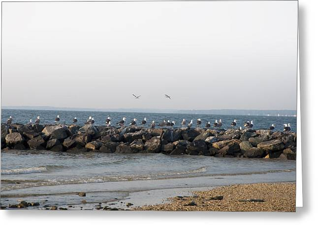 Seagulls On A Jetti Greeting Card by Bill Cannon