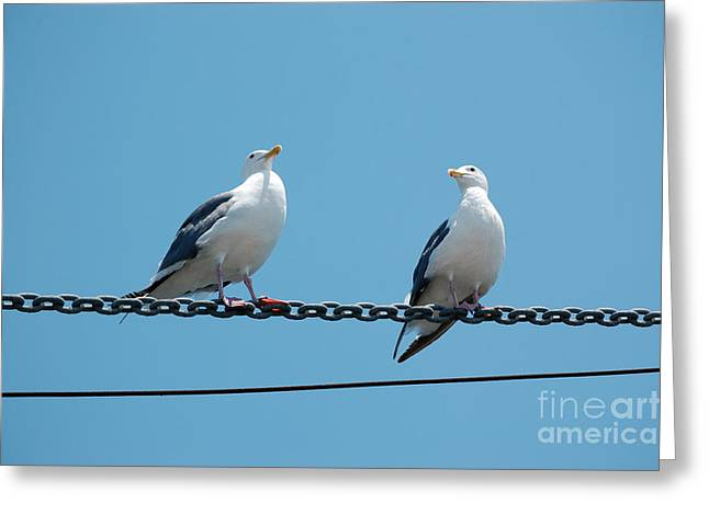 Seagulls On A Wire Greeting Card by Debra Thompson