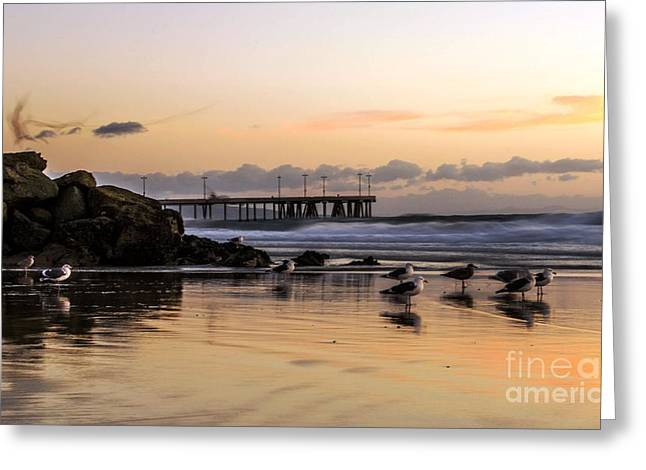 Seagulls On The Coast Greeting Card