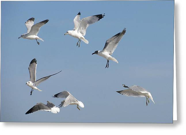 Seagulls See A Cracker Greeting Card