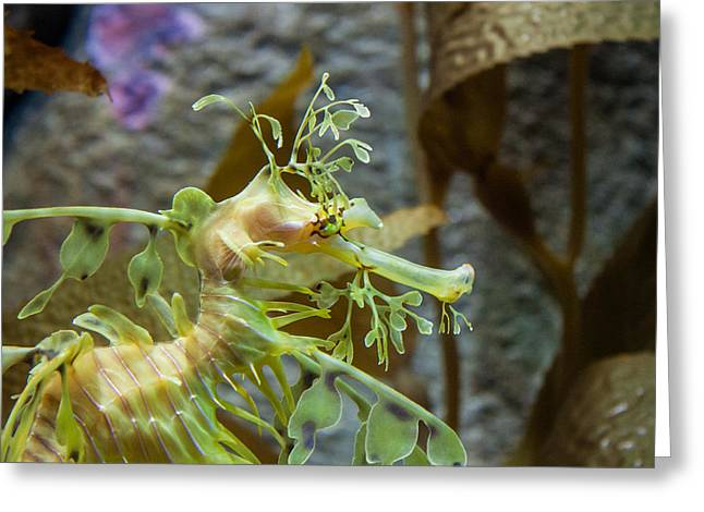 Seahorse Greeting Card by Mike Lee