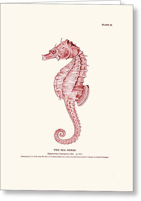 Seahorse Pink Vintage Greeting Card