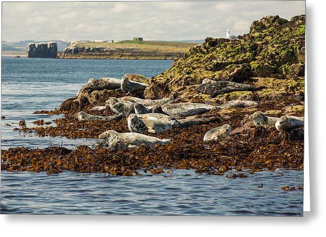 Seahouses On The Northumberland Coast Greeting Card by Ashley Cooper