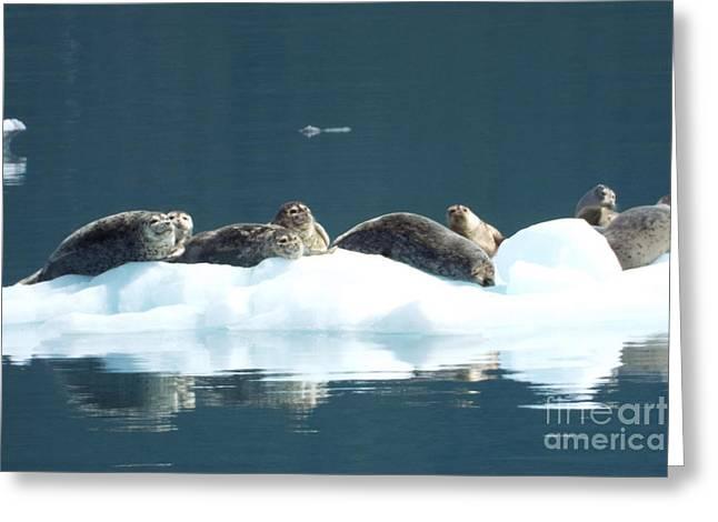Seal Reflections Greeting Card