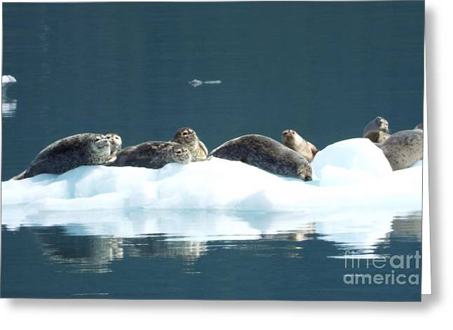 Seal Reflections Greeting Card