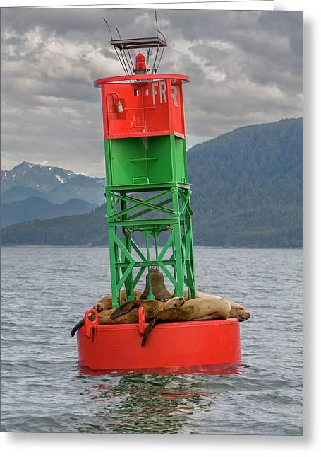 Seals Resting On Buoy Greeting Card