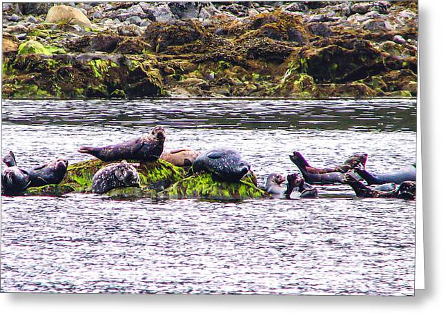 Seals Resting Greeting Card by Robert Bales