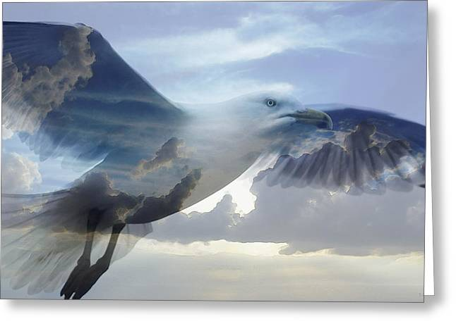 Searching The Sea - Seagull Art By Sharon Cummings Greeting Card