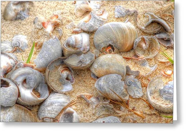Seashell 01 Greeting Card