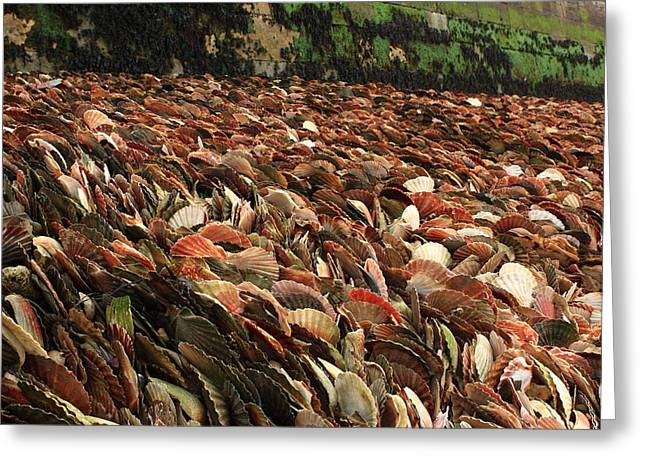 Seashell Coast Greeting Card by Aidan Moran