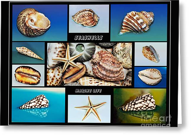 Seashell Collection 2 Greeting Card by Kaye Menner