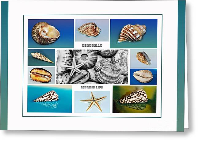 Seashell Collection 3 - Collage Greeting Card by Kaye Menner