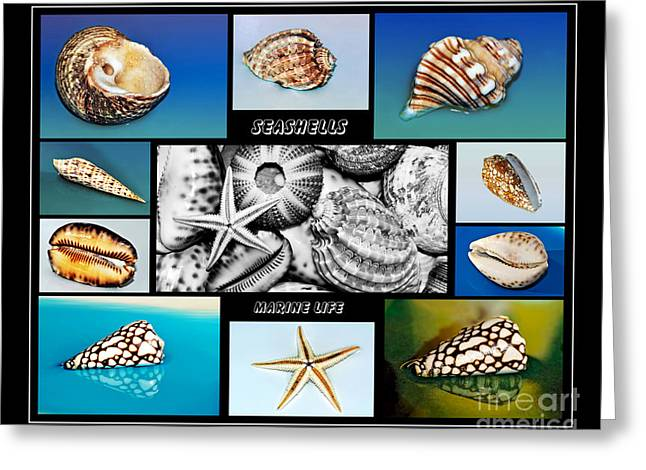 Seashell Collection Greeting Card by Kaye Menner