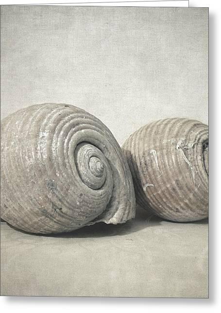 Seashell No.3 Greeting Card