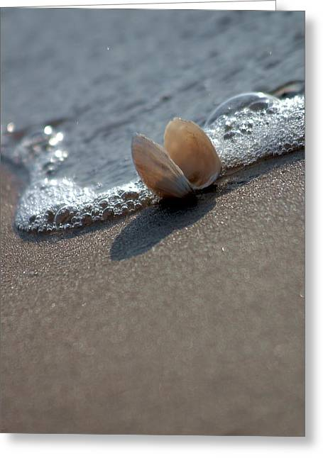 Seashell On The Coast With Wave Greeting Card