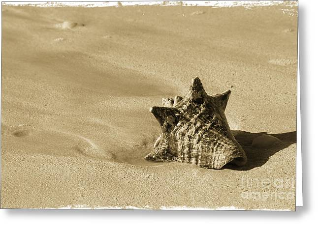 Seashell Greeting Card by Sophie Vigneault