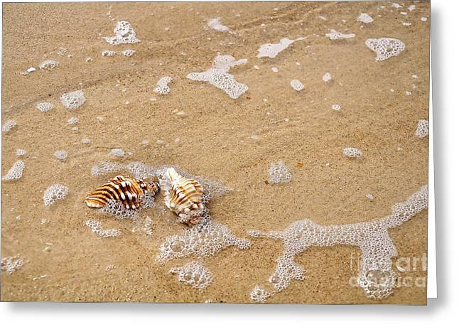 Seashells And Bubbles Greeting Card by Kaye Menner