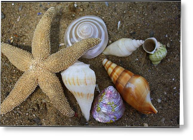 Seashells And Star Fish Greeting Card