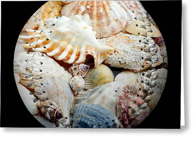 Seashells Baseball Square Greeting Card