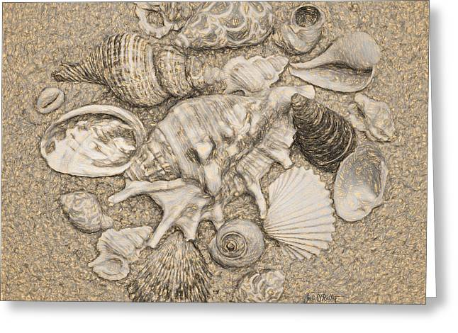 Seashells Collection Drawing Greeting Card by Sandi OReilly