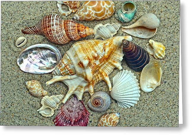 Seashells Collection Greeting Card by Sandi OReilly