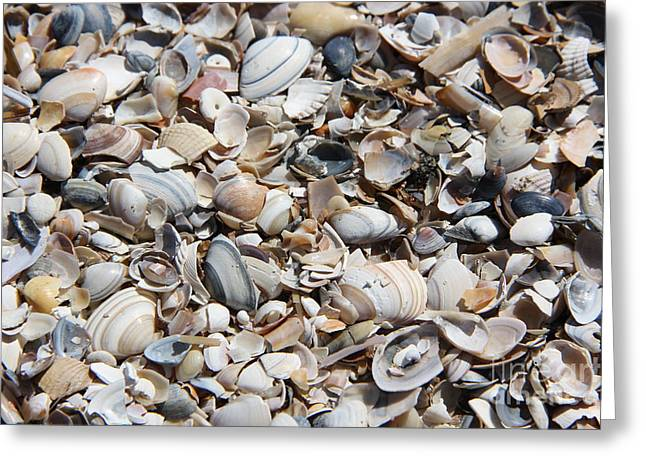 Seashells On The Beach Greeting Card