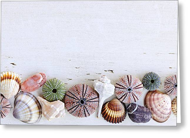 Seashells On Wood Background Greeting Card
