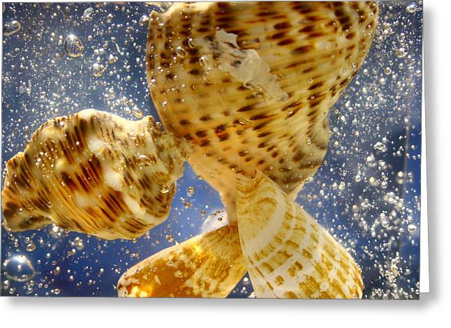 Greeting Card featuring the photograph Seashells by Paula Brown