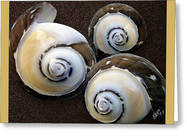 Seashells Spectacular No 23 Greeting Card by Ben and Raisa Gertsberg