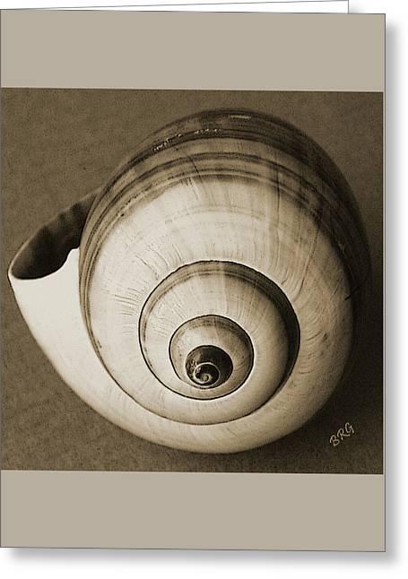 Seashells Spectacular No 25 Greeting Card by Ben and Raisa Gertsberg