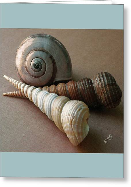 Greeting Card featuring the photograph Seashells Spectacular No 29  by Ben and Raisa Gertsberg