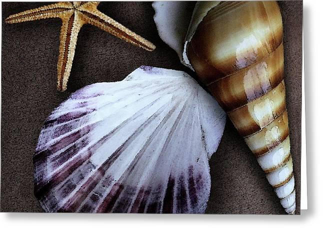 Seashells Spectacular No 37 Greeting Card
