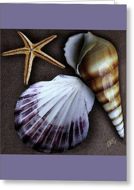 Seashells Spectacular No 37 Greeting Card