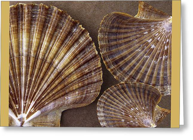 Seashells Spectacular No 7 Greeting Card by Ben and Raisa Gertsberg