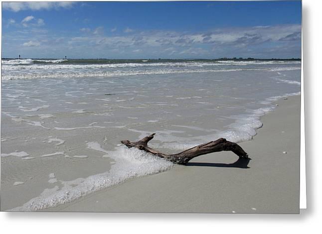Seashore Driftwood Greeting Card by Rosie Brown