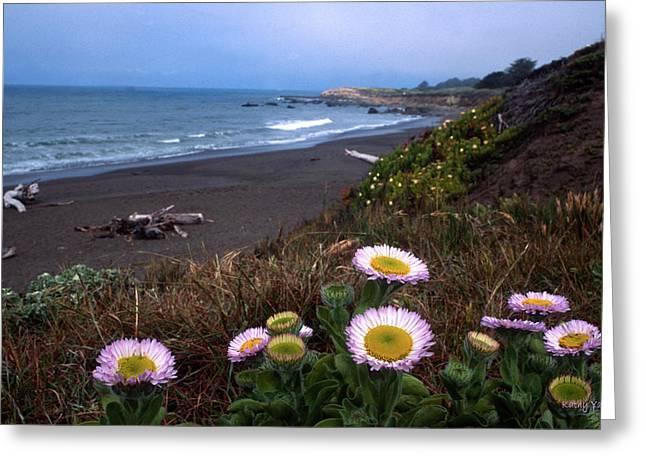Seaside Daisies On Moonstone Beach Greeting Card by Kathy Yates