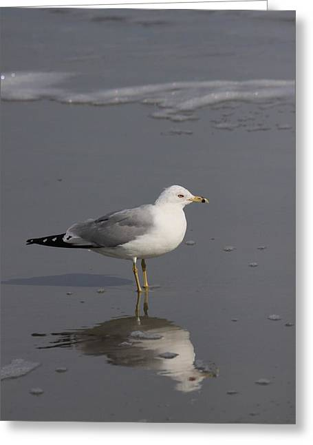 Seaside Sentinel Greeting Card