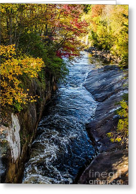 Seasons Change In Clare Greeting Card