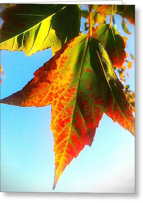 Greeting Card featuring the photograph Season's Change by James Aiken