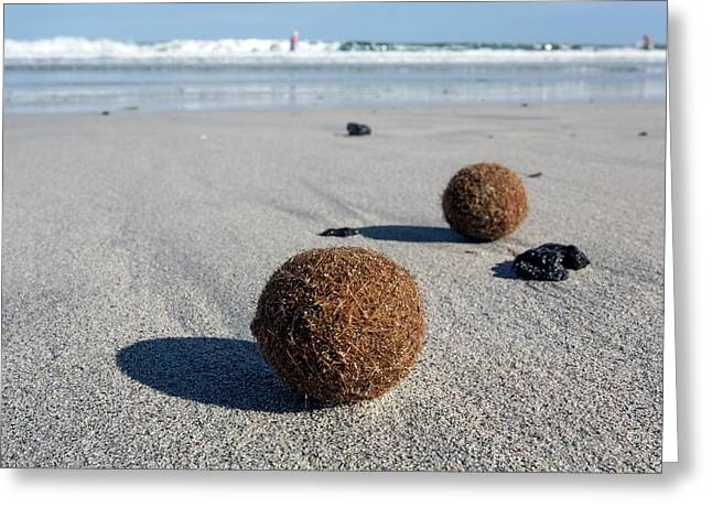 Seaweed Balls On Sandy Beach Greeting Card