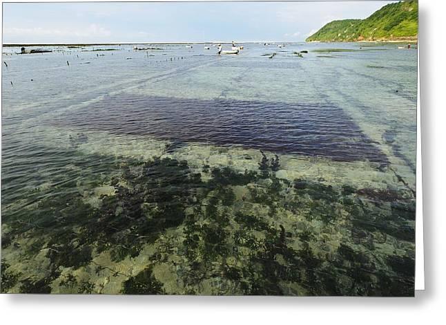 Seaweed Farming, Bali Greeting Card by Science Photo Library