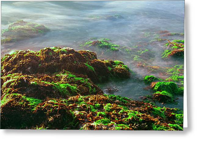 Seaweed On Rocks At The Coast, Las Greeting Card by Panoramic Images