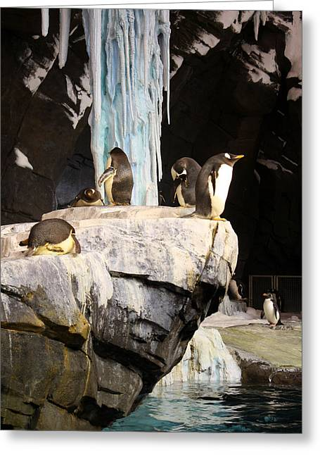 Seaworld Penguins Greeting Card