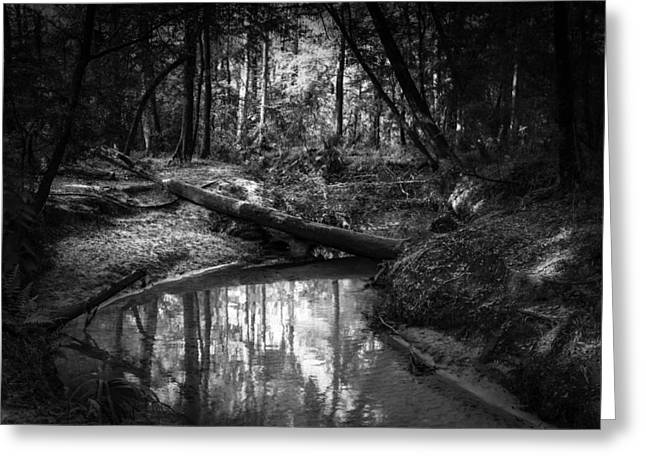 Secluded Creek Greeting Card