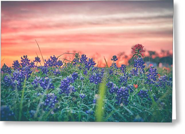 Secret Bluebonnets Greeting Card